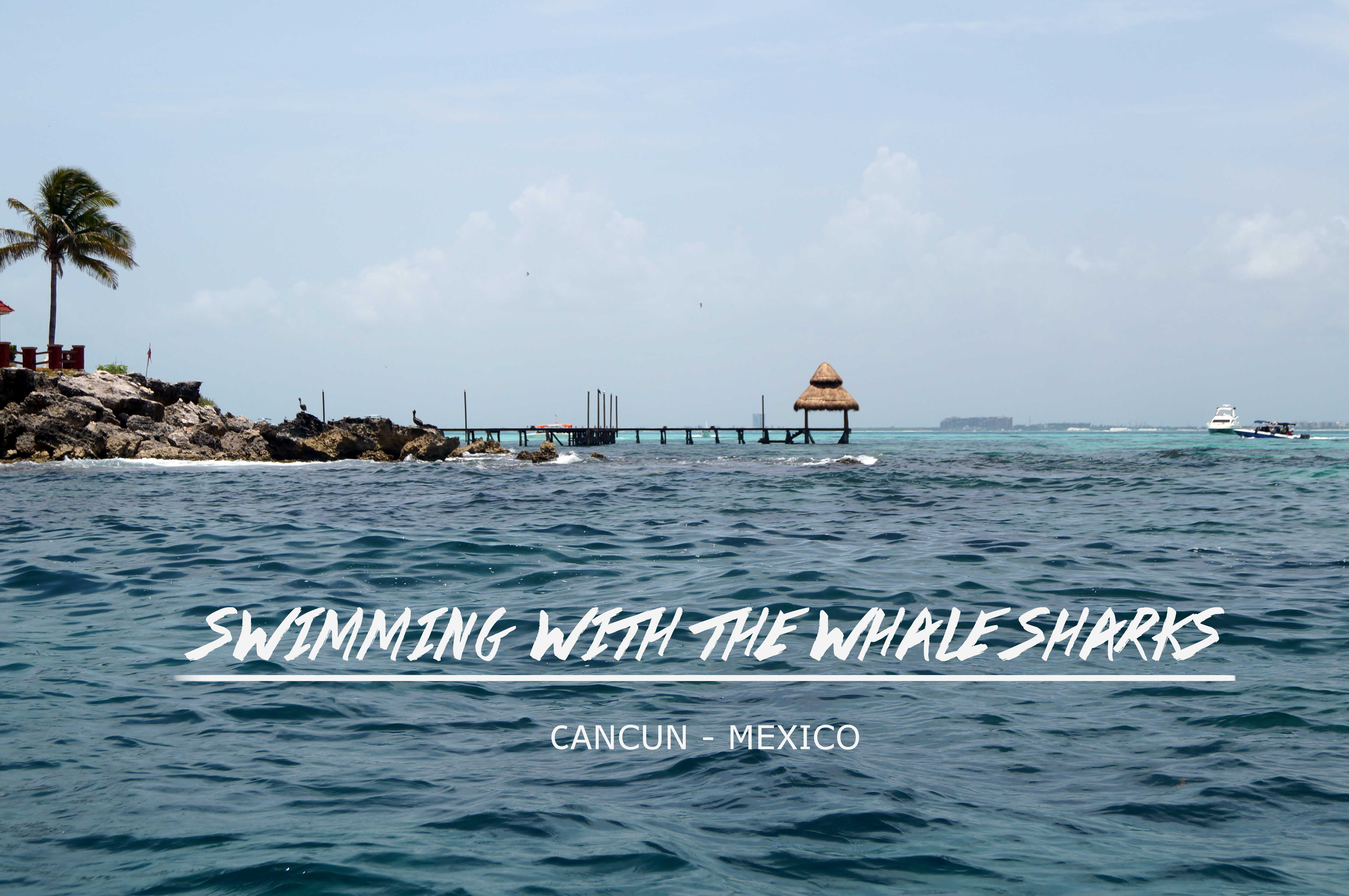 Walhai-Tour, Cancun, Mexico