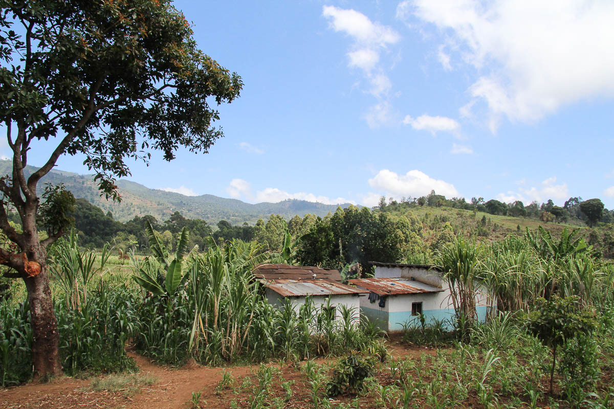 housing in Usambara mountains
