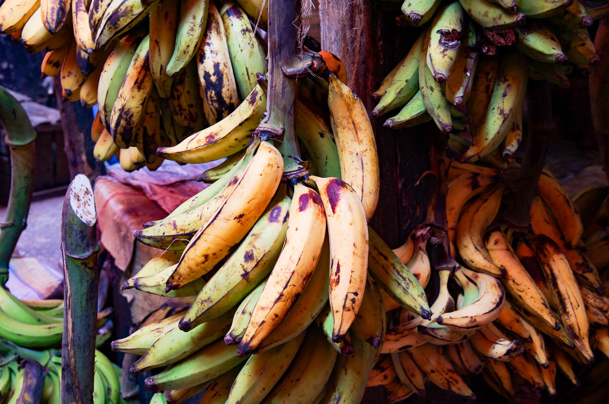 banana bush on Stonetown market