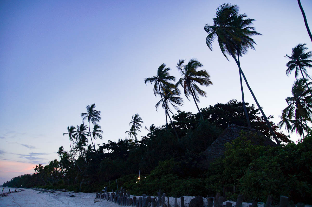 palmtrees at night at Matemwe beach