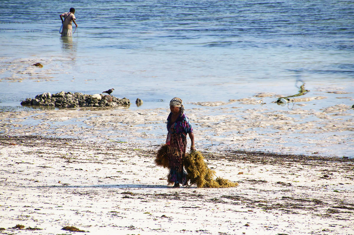 woman coming out of water with seagrass